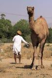 Gammal Rajasthani man med turbanen Arkivfoton