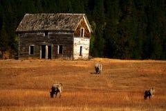 gammal ranch för 2 hus Arkivbild