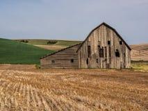 Gammal riden ut ladugård som omges av vetefält Arkivbild