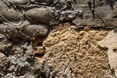 Gammal riden ut murverkv?gg med att smula tegelsten och m?nga cementlappar, som en texturerad bakgrund arkivfoton