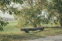 Gammal riden ut träbänk mellan träd i en naturlig lantlig region royaltyfria bilder