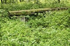 Gammal risig träbänk i trädgård royaltyfria bilder
