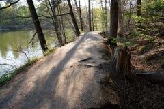 Gammal romantisk väg på lakeside inom skog royaltyfria foton