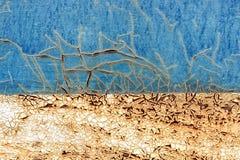 Gammal rostig metallbakgrund med blå sprucken skalning och vit p royaltyfri bild