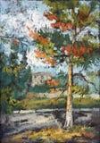 Gammal sörja-tree i solnedgånglampan Arkivfoto