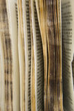 gammal serie för ordbok royaltyfria bilder