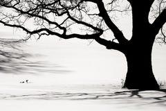 gammal silhouettetreevinter Royaltyfri Fotografi
