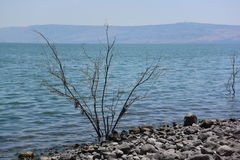 Gammal sjö Royaltyfria Foton