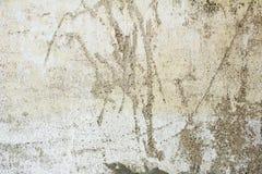 Gammal sjaskig stuckaturpargetvägg med den spruckna strukturen Royaltyfri Foto