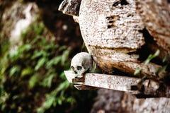 Gammal skalle som lägger nära träkistan Hängande kistor, gravar Traditionell jordfästningplats, kyrkogård Kete Kesu i Rantepao, T Royaltyfri Fotografi
