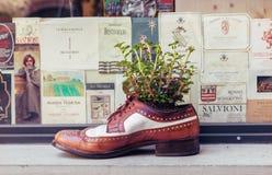 Gammal sko som den dekorativa blomkrukan royaltyfri bild