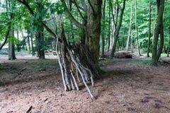Gammal skog i hjärtan av staden Arkivbilder
