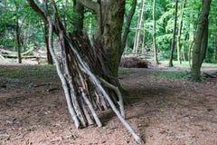 Gammal skog i hjärtan av staden Arkivbild