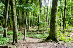 Gammal skog i hjärtan av staden royaltyfria foton