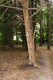 Gammal skog i hjärtan av staden Royaltyfri Bild