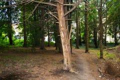 Gammal skog i hjärtan av staden Arkivfoto