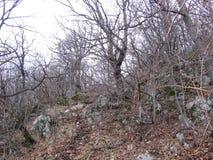 Gammal skog nära Grza Arkivfoto