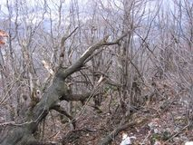 Gammal skog nära Grza Royaltyfri Foto