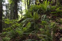 gammal skogtillväxt Fotografering för Bildbyråer