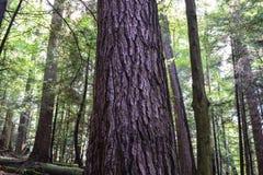 gammal skogtillväxt Royaltyfri Foto