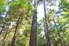 gammal skogtillväxt Arkivbilder