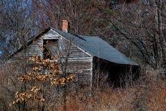 Gammal skröplig kabin som är bevuxen med ogräs, och träd Fotografering för Bildbyråer