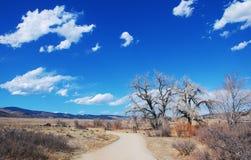 gammal sky för stora popplar under vinter Arkivbild