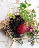 Gammal slavisk ortodox hednisk ritual av fertilitet Förbereda sig till att skorra påskägget i ängen, första rad i fältet, innan a royaltyfri foto
