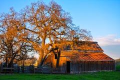 gammal solnedgång för ladugård Fotografering för Bildbyråer
