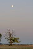 gammal sommartree för fält Arkivfoto