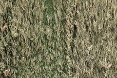 gammal spansk vägg för horisontalmoss arkivfoto