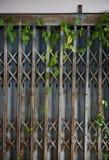 Gammal stängd ståldörr och murgröna Texturmodell och bakgrund royaltyfri foto