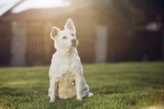 gammal stående för hund Arkivbild