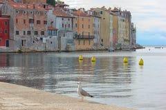 Gammal stad av Rovinj Kroatien royaltyfri fotografi