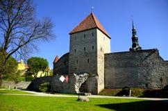 Gammal stadsvägg Tallinn Estland royaltyfria foton