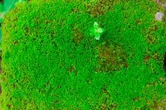 Gammal sten för Closeup som är bevuxen med grön mossa i skogen för backgr Arkivfoto