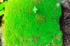 Gammal sten för Closeup som är bevuxen med grön mossa i skogen för backgr Arkivbild