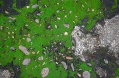 Gammal sten med grön mossabakgrund Royaltyfria Bilder