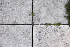 Gammal stenbakgrund med något gräs på det Royaltyfria Foton