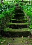 Gammal stentrappa bland gräset Arkivfoto