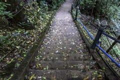 Gammal stentrappuppgång i djungeln Arkivfoton
