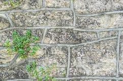 Gammal stenvägg Royaltyfri Foto
