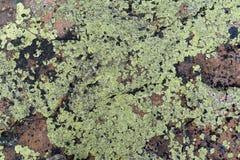 Gammal stenvägg i padleyklyftan, Derbyshire Royaltyfria Bilder