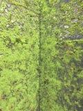 Gammal stenvägg med mossa Royaltyfri Foto