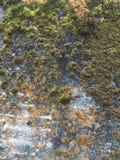 Gammal stenvägg med mossa Royaltyfri Fotografi