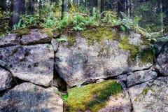 Gammal stenvägg som täckas av mossa och vegetation, Viborg, Ryssland Arkivbilder