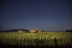 Gammal stuga i mitt av ett fält av solrosor i Tuscany Royaltyfri Bild