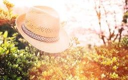 Gammal sugrörhatt mot fäst på en växt in Fotografering för Bildbyråer