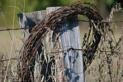 Gammal taggtråd på staketet Arkivfoto