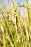 Gammal tangent med en etikett som isoleras på vit bakgrund Fotografering för Bildbyråer